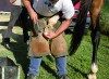 Il-10-giugno-lavori-di-addestramento-dei-cavalli-da-Palio-nella-pista-di-Mociano